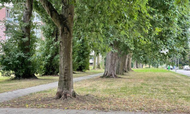 IJsselsteinse fruitbomen collectie aangetast door besmettelijke bomenziekte