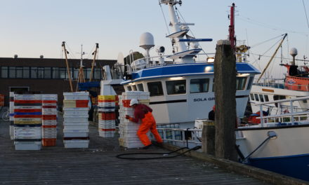 No-deal Brexit: a nightmare for Dutch fishermen
