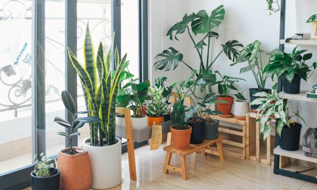 Productiviteit en gemoedstoestand verbeteren? Koop een (kamer)plant!